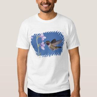 colibrí Amplio-atado, Selasphorus Remera