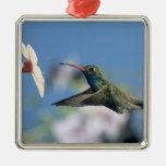 colibrí Amplio-cargado en cuenta, Cynanthus 2 Adorno Cuadrado Plateado