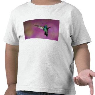 Colibrí Amplio-Cargado en cuenta, Cynanthus Camisetas