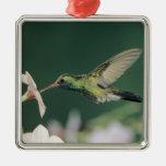 colibrí Amplio-cargado en cuenta, latirostris de Adorno Navideño Cuadrado De Metal