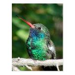 colibrí Amplio-cargado en cuenta Postal