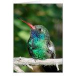 colibrí Amplio-cargado en cuenta Tarjetón