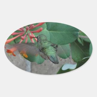 colibrí anaranjado de la flor pegatina ovalada