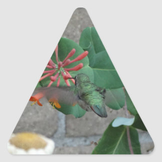 colibrí anaranjado de la flor pegatina triangular