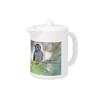 colibrí Azul-throated