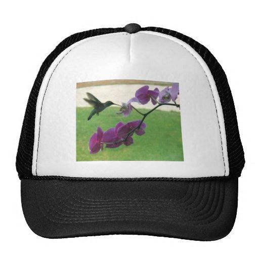 Colibrí con la orquídea gorra
