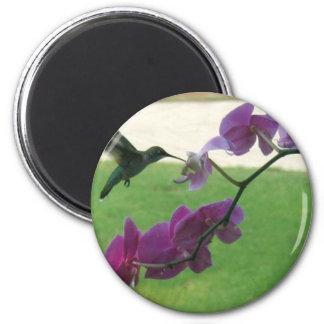 Colibrí con la orquídea imán redondo 5 cm