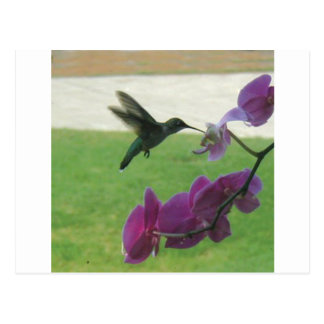 Colibrí con la orquídea tarjeta postal