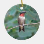colibrí de la Rubí-garganta Ornamento Para Reyes Magos