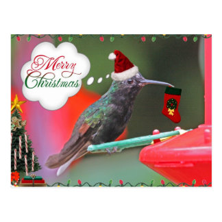 Colibrí de las Felices Navidad Tarjeta Postal