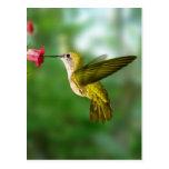 Colibri De Oro República Dominicana Postales