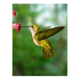 Colibri De Oro República Dominicana Post Card