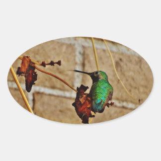 colibrí de rubíes verde pegatina ovalada