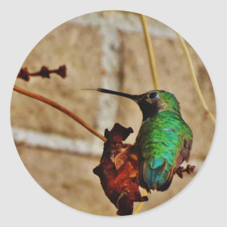 colibrí de rubíes verde pegatina redonda