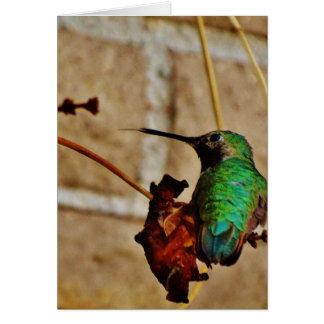 colibrí de rubíes verde felicitacion