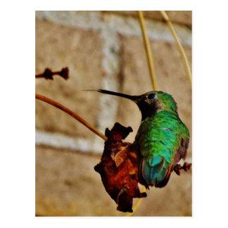 colibrí de rubíes verde postales