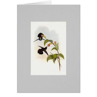 Colibrí de Wedgebill de Gould - de Geoffroy Felicitación