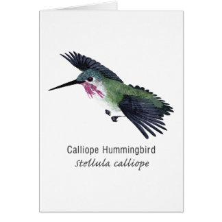 Colibrí del Calliope con nombre Felicitacion