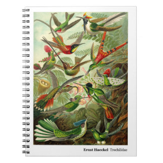 Colibrí del Trochilidae de Ernst Haeckel Libretas