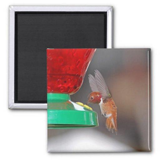 Colibrí del vuelo y alimentador del colibrí imán cuadrado