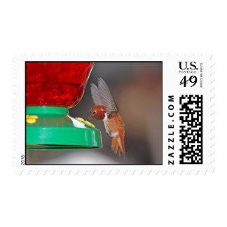Colibrí del vuelo y alimentador del colibrí sellos postales