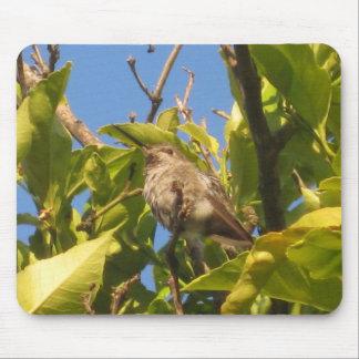 Colibrí en árbol de limón tapete de ratones