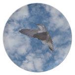 Colibrí en cielo azul plato de comida