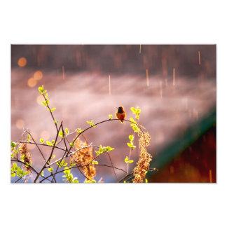 Colibrí en ducha de lluvia arte fotográfico