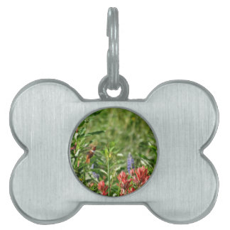 Colibrí en flores salvajes placa de mascota