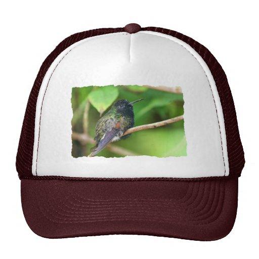 Colibrí en foto de la selva gorra