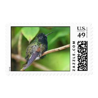 Colibrí en foto de la selva sellos postales