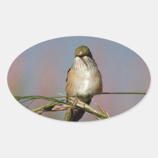 colibrí en hierba pegatina ovalada