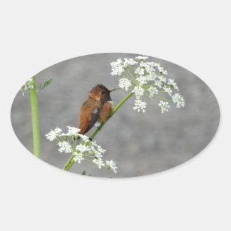 Colibrí en la flor del cordón de la reina Ana Pegatina Ovalada