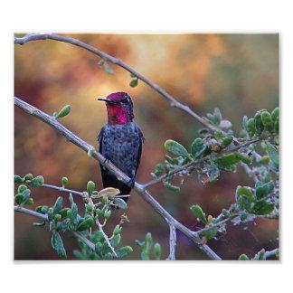 colibrí en la puesta del sol cojinete