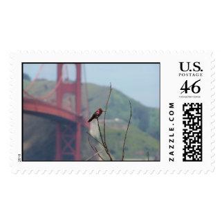Colibrí en puente Golden Gate