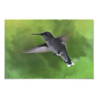 colibrí en vuelo fotografías