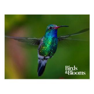 Colibrí flotante tarjeta postal