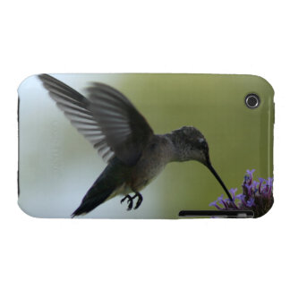 Colibrí iPhone 3 Protectores
