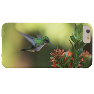 Colibrí Funda De iPhone 6 Plus Barely There