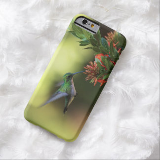 Colibrí Funda De iPhone 6 Barely There