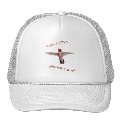 colibrí gorros