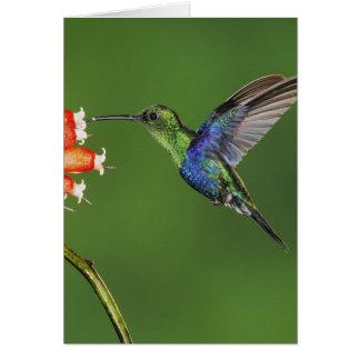 Colibrí hermoso tarjeta de felicitación