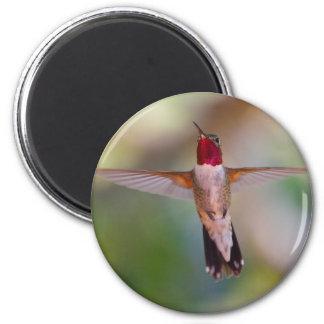 colibrí iman de nevera