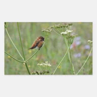 Colibrí: Pájaro en flores Pegatina Rectangular