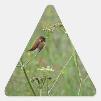Colibrí: Pájaro en flores Pegatina Triangular