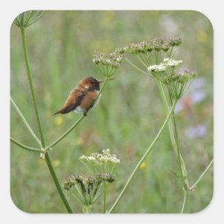 Colibrí: Pájaro en flores Pegatina Cuadrada