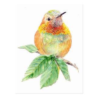Colibrí, pájaro, naturaleza, fauna, postal