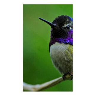 Colibrí púrpura plantilla de tarjeta de negocio