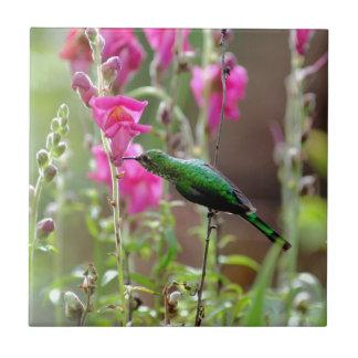 Colibrí que alimenta en el néctar teja
