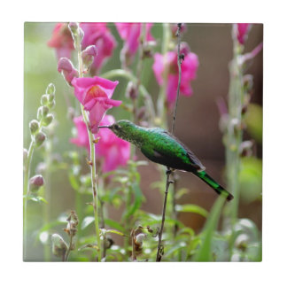 Colibrí que alimenta en el néctar azulejo cuadrado pequeño